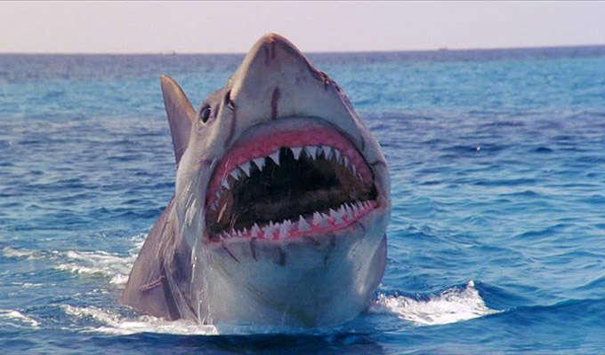 Via http://footage.framepool.com/shotimg/qf/264649875-jaws-4-film-mouth-open-tooth-shark-fish.jpg